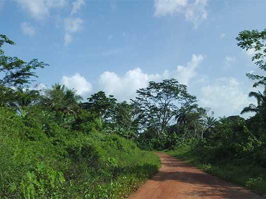 wie-zijn-wij---over-liberia---natuurlijke-rijkdom---mineke-foundation